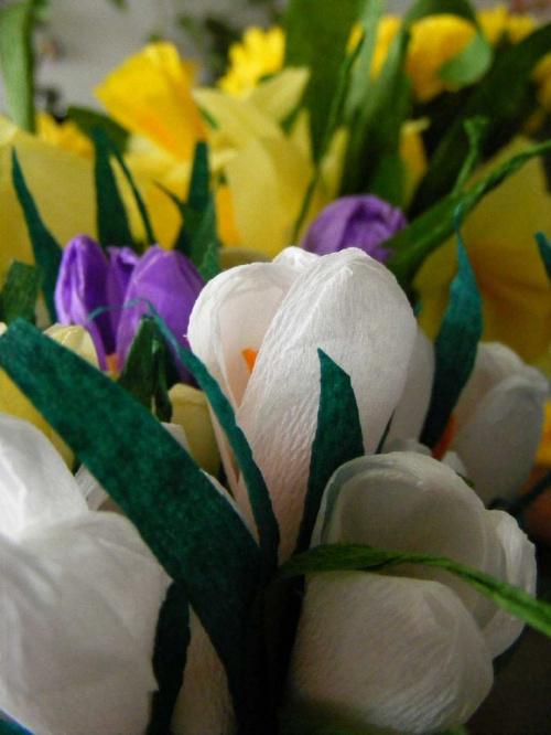 krokusy.. #kwiaty #bibuła #krokusy