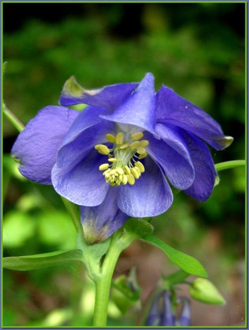 hmmmm... nie wiem, jak się nazywa... :( #kwiaty #ogród #wiosna #natura #flora #przyroda