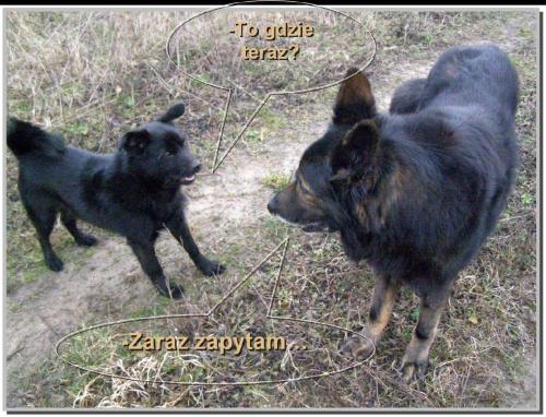 #Psy #zabawne #zwierzęta #fauna #komiks