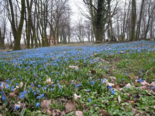 ... tak sobie rosną dziko ... **** ulub. inka47 **** #kwiaty #łąka #StaryCmentarz #śnieżnik #park #wiosna