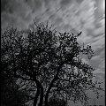 Czas płynie ... :) #noc #niebo #drzewo #czas