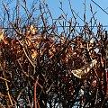 Jesienna wiosna :) Poniżej już pączkujące gałązki (na poprzednich dwóch zdjęciach ;-) #wiosna #jesiennie #liście #liść #gałęzie #gałąź