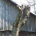 #drzewo #drewno #deski
