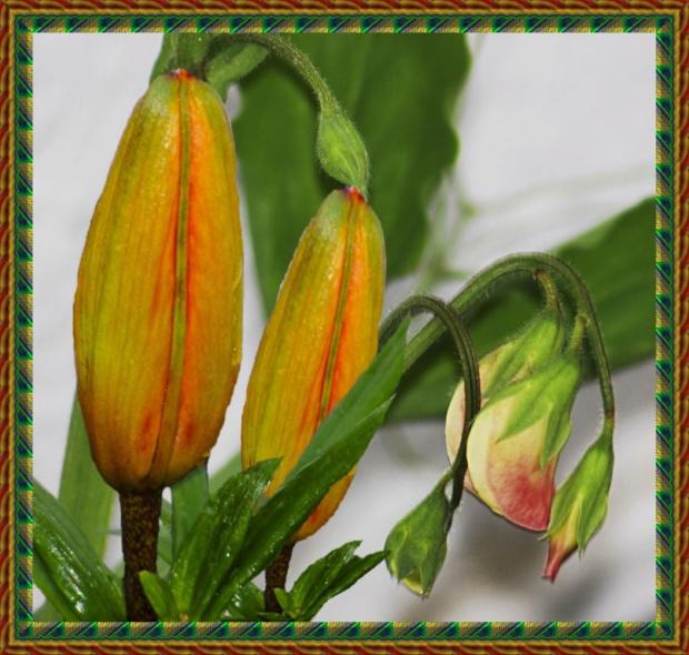Pachnacy groszek i Lilie... #kwiaty #wiosna #lilie
