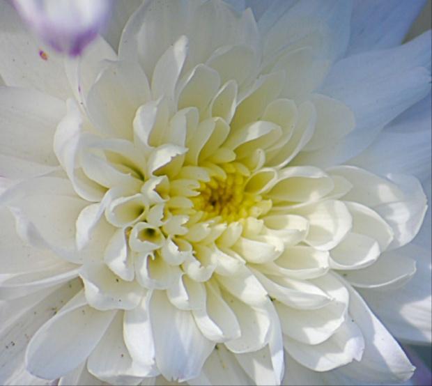 #kwiaty #alicjaszrednicka
