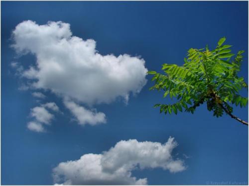 Palma ? Nie bardzo ... zdjęcie wykonałem u siebie przed domem z użyciem C-PL :) #niebo #chmury #lato #wiosna #palma #krzewy #drzewa