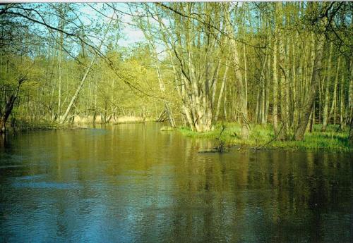 Skan z odbitki. Wiosna, gdzieś w okolicach Drawna (dawno temu, to i zapomniałam) #woda #rzeka #wiosna
