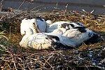 http://images6.fotosik.pl/21/ed2a1af123aa1a77m.jpg