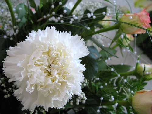 Ineczko dla Ciebie na imieninki (dla inki47) ... **** ulub. inka47 **** #goździki #bukiety #kwiaty #życzenia
