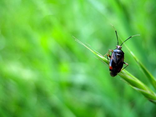 taki sobie robalek ... znaleziony w trawie ... #chrząszcze #owady #makro