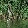 Spacer po parku wilanowskim #ptaki #czapla #Wilanów