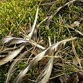 Właściciel tych piór prawdopodobnie już nie żyje :P #pióro #pióra #las #ptaki