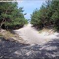 Droga na plaże #piach #plaża #drzewo #drzewa #ścieżka