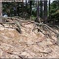 Wydmy #Wydmy #piach #plaża #drzewo #drzewa