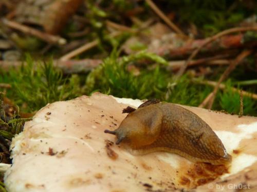 Ślimak #zwierzęta #owady #przyroda #natura #flora #fauna #ślimak