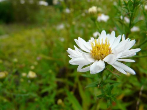 #rośliny #ogród #botanika #przyroda #natura #flora #fauna