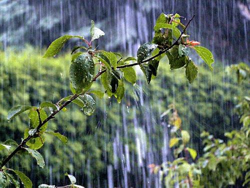 Straszna ulewa w moim ogródku :) Może jakość nie najlepsza, ale nie jest łatwo sfotografować deszcz :) #deszcz