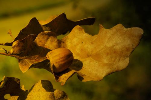 Jesienne plody #jesien #macro #przyroda
