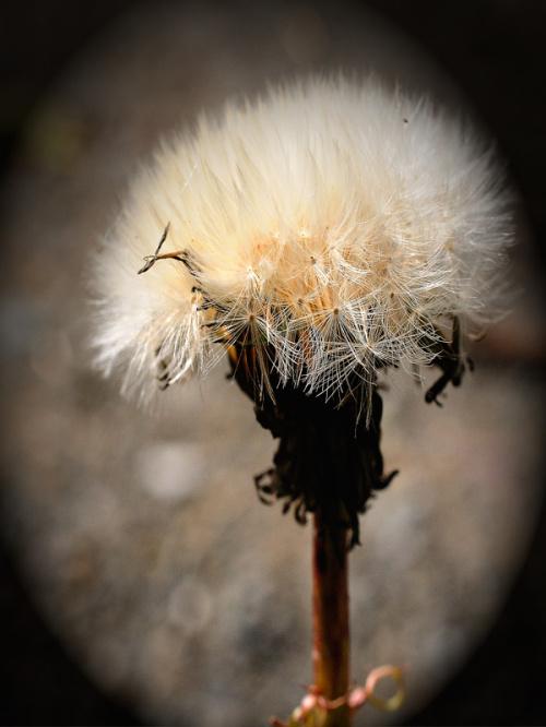 Wszystko przekwita i jesien wita:) #jesien #macro #przyroda