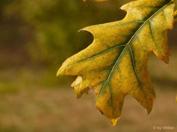 #jesień #przyroda #ogród #botanika #natura