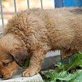 Szczeniaczek, chłopczyk do wydania. Mam nadzieję, że do końca września 2008r. znajdzie dom. #psy #szczeniak