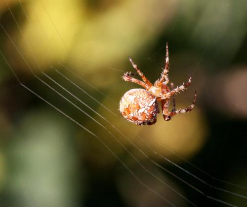 pająk... jakiś