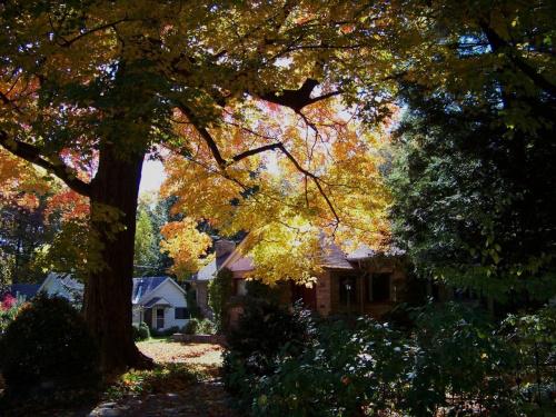 jesien w Toronto #jesien #Toronto #Canada #Kanada