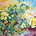 obraz 50-60 kaczeńce #kwiaty #kaczeńce #malarstwo