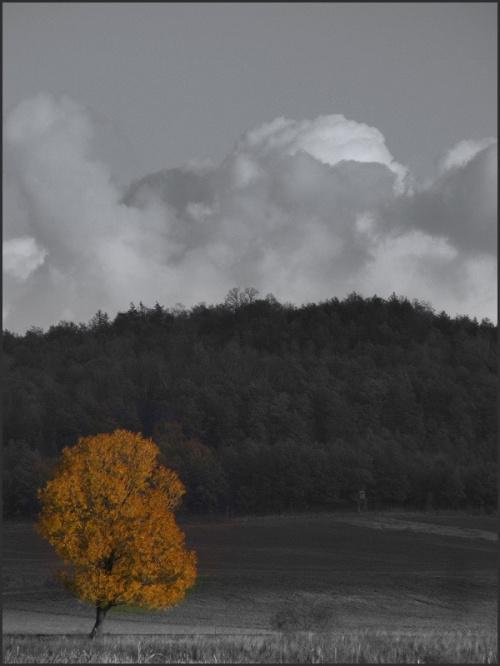 oblicza jesieni..szara..