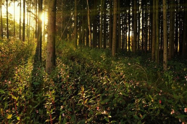jesienne krajobrazy /ten busz zielony to kwiaty rozowe podobne do orchidei dzikiej,jest tam tego mnostwo,ale kwiaty te nie pachna jak dzika orchidea,od ktorej caly las zawsze pachnie)