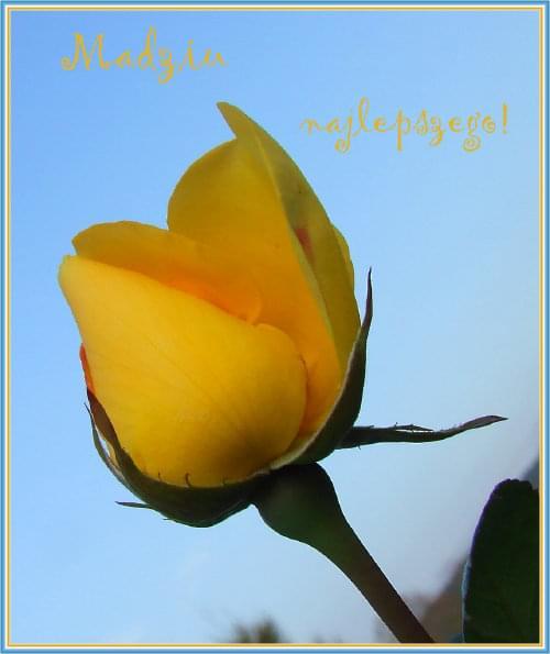cudny kwiatek od maxmaks :) dziekuje