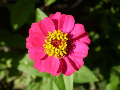 kwiatuszek od tryl7 dziekuje :)