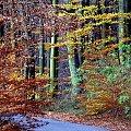 jesien w Puszczy Bukowej #jesień #las #drzewa #puszcza