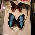 motylki #motylki #motylarnia #Niagara #Canada