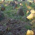 Studzianka nagrobki tatarskie. Studzianka Tatare tombstones. #muzułmanie #nagrobki #Studzianka #cmentarz