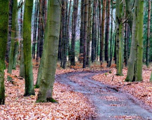 dzisiaj w lesie, zanim zaczelo padac...... #las