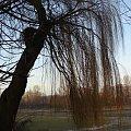 panoramicznie stawy Jana w Łodzi #łódż #staw #Jana #przyroda #Polska #foto #mróz