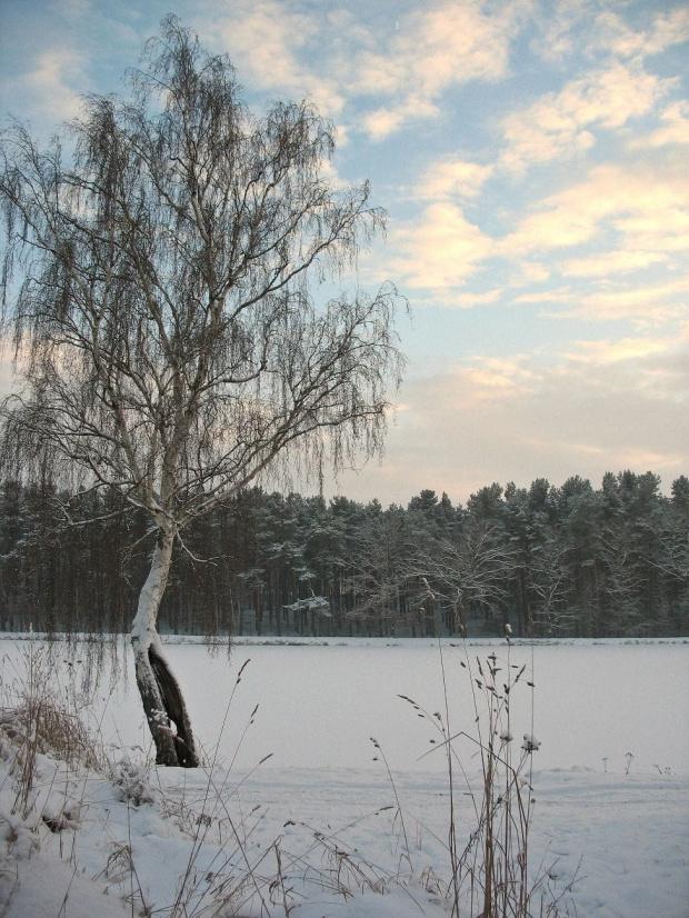 Dialog odmarzł :) #zima #śnieg #zalew #niebo #spacer