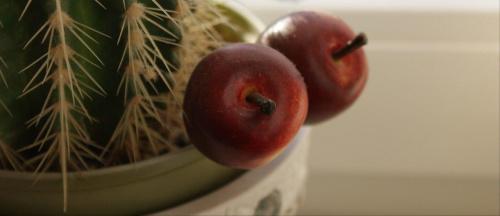 kompozycja #kaktus #owoce #kompozycja