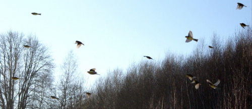 #ptaki #zwierzęta #natura