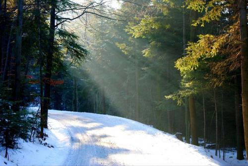 #droga #słońce #natura #las