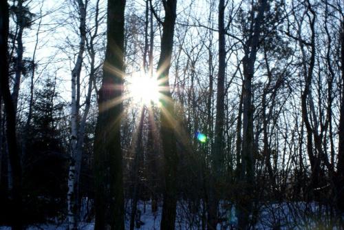 #słońce #las #natura