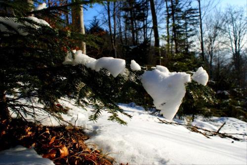 #śnieg #drzewo #natura #plener