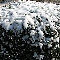 Hu! hu! ha!, hu! hu! ha!Nasza zima zła! Szczypie w nosy, szczypie w uszy,Mroźnym śniegiem w oczy prószy,Wichrem po ulicach gna! #zima #styczen #PrzedrzezniaczPolnocy