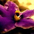 na moim parapecie #kwiaty #parapet
