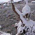 na zimowo ... #rzeka #Opava #zima #Chomiąża