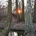 #słońce #rano #drzewa #rzeczka