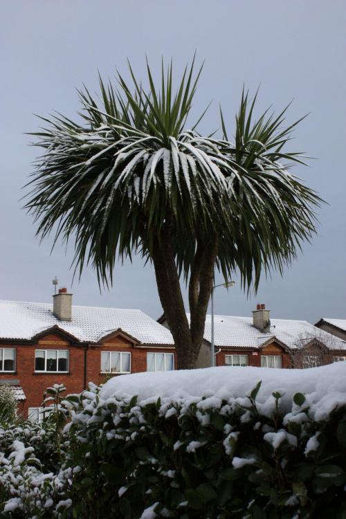 widoczek z mojego okna..na śnieg który tu nie padał przez ostatnie 18 lat..:):)
