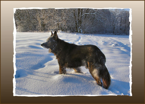 #psy #śnieg #wieś #zima #zwierzęta
