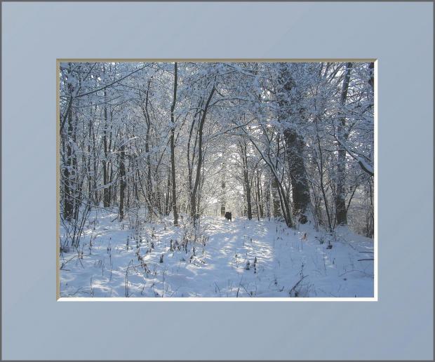 #drzewa #flora #łąki #pola #psy #śnieg #wieś #zima #zwierzęta